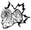 Havanese Fanciers of Canada